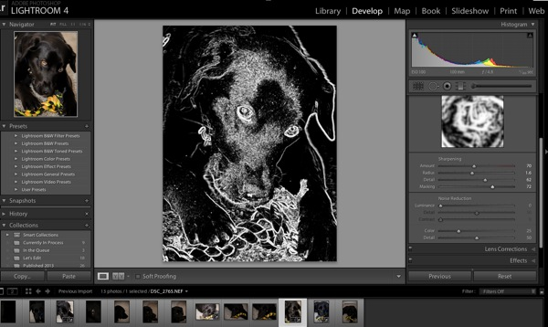 Learn How to Use the Sharpening Tools in Lightroom