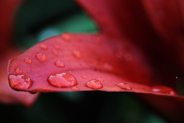 This image I went in search of things red. 1/320, f/7.1, ISO 1000. EOS 5D Mark II, EF 100mm f/2.8L IS Macro.
