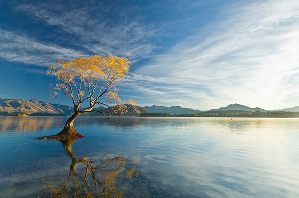 NZ WA Lake Wanaka Willow Reflection 01