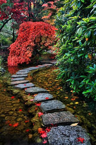 Linhas principais: Jardim Japonês de Anne McKinnell