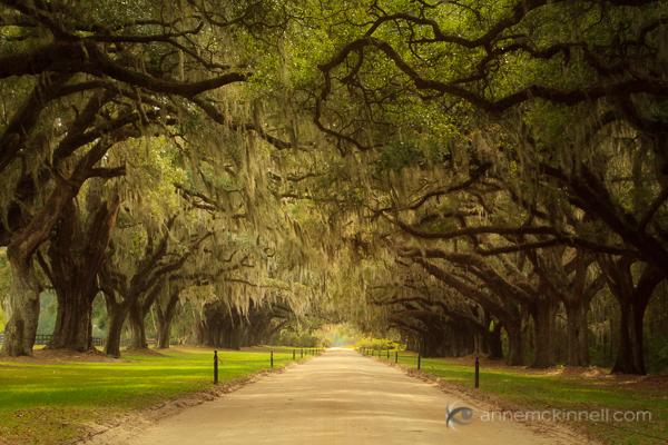 Leading Lines: Avenue of Oaks, South Carolina, by Anne McKinnell