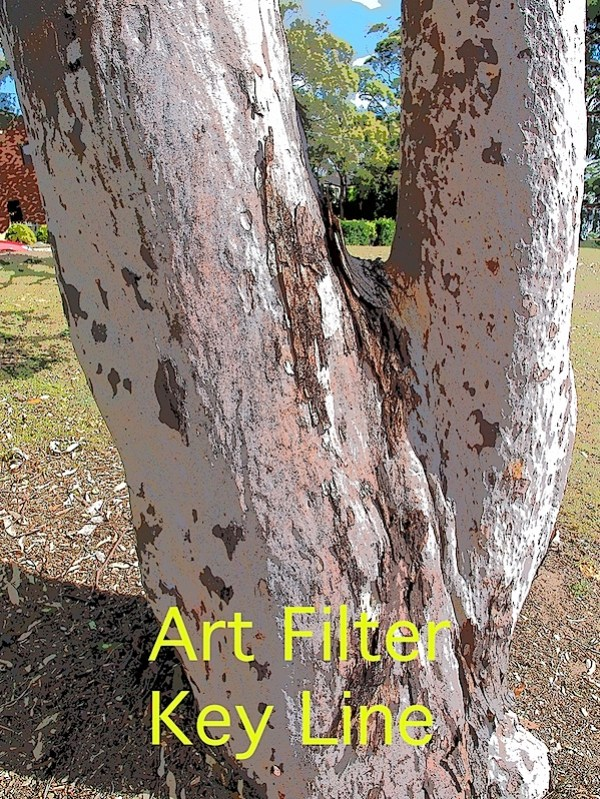 Tree 3 Key line.JPG