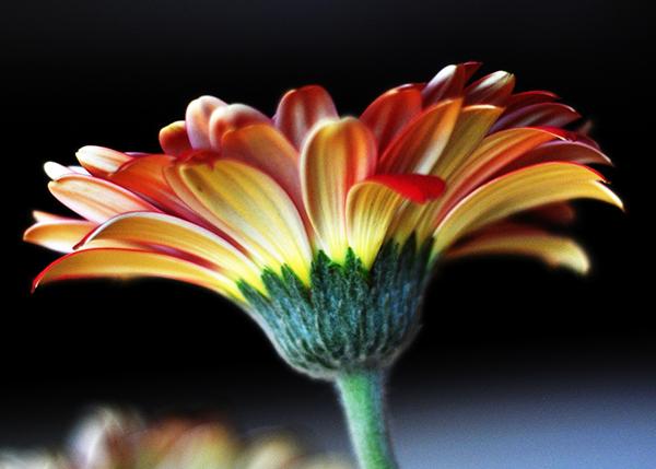 dPS Flowers-002