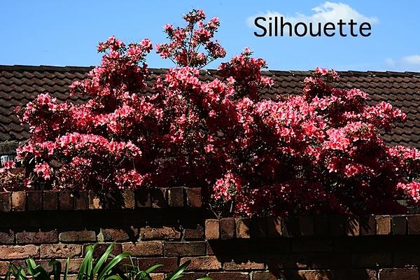 Flowers silhouette.JPG