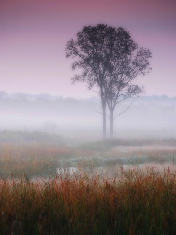 Misty autumn dawn photo