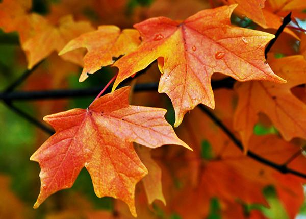 texture-002-leaves