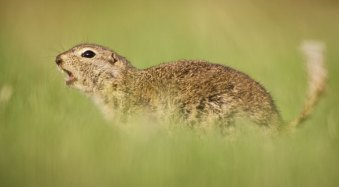 How Low Can you Go? An Illustration of Camera Angle for Wildlife Photography