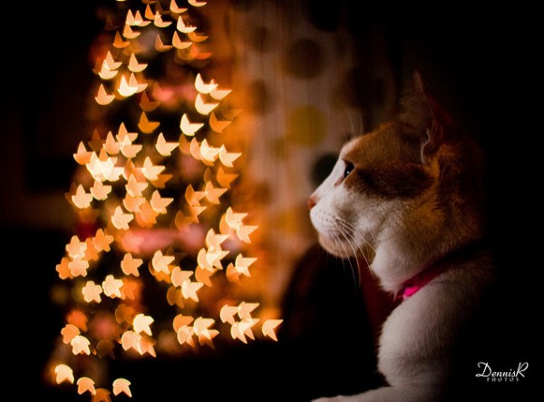 My Cat's Starry Christmas