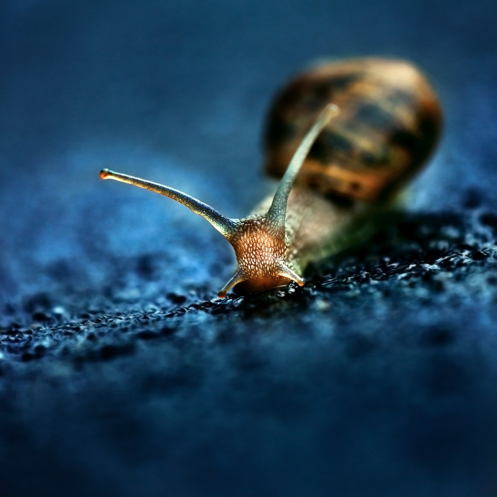 Slow Down [And Take Better Photos] - Digital Photography School