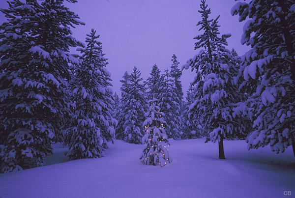 Winter wonderland holiday photo tree 20