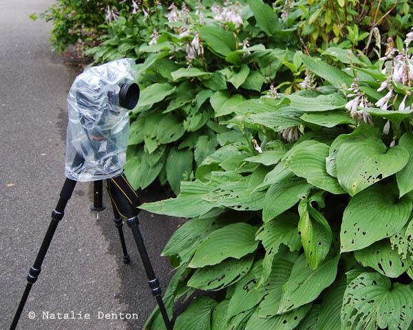 Plastic bag for protecting camera in the rain Natalie Denton