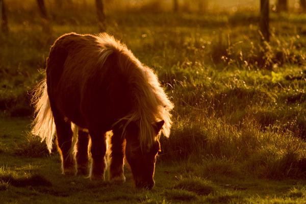back lighting wildlife photography