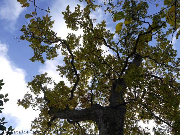 widen dynamic range correct exposure tree Natalie Denton