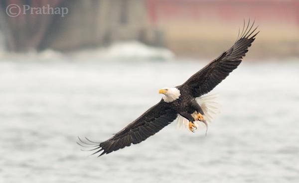 10 dicas incríveis de fotografia de pássaros para iniciantes