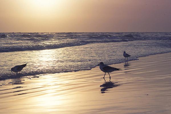 bird_trio