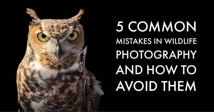 5 Most Common Mistakes in Wildlife Photography and How to Avoid Them