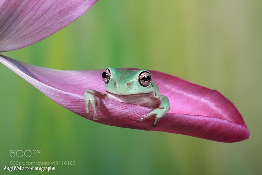 Photograph The Cutie by Angi Wallace on 500px