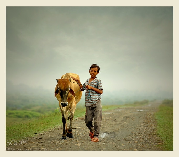 Photograph me and my cow by Teuku Jody  Zulkarnaen on 500px