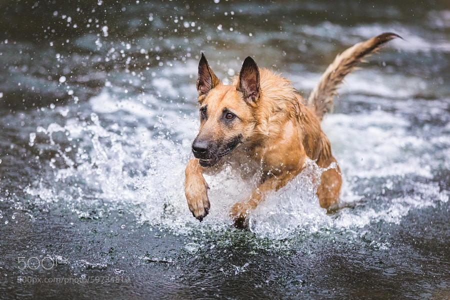 Photograph Winter water fun by Elke Vogelsang on 500px