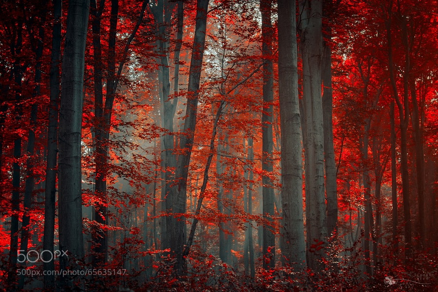 Photograph Firewood by Ildiko Neer on 500px