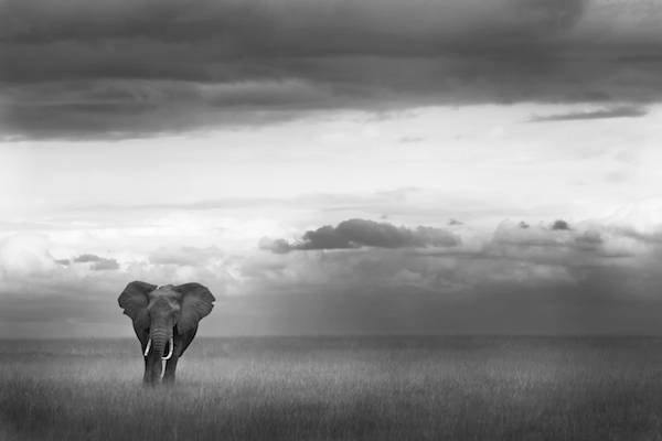 Photography-backgrounds-elphant-africa-Piper-Mackay-01