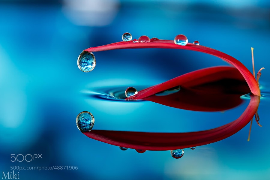 Photograph Abstract Red & Blue by Miki Asai on 500px