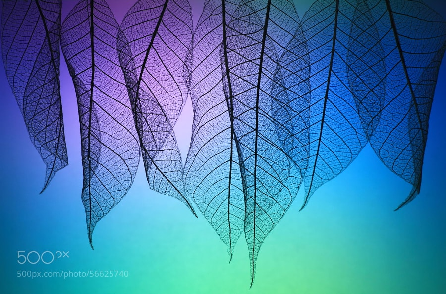 Photograph Prismatic leafs by Shihya Kowatari on 500px