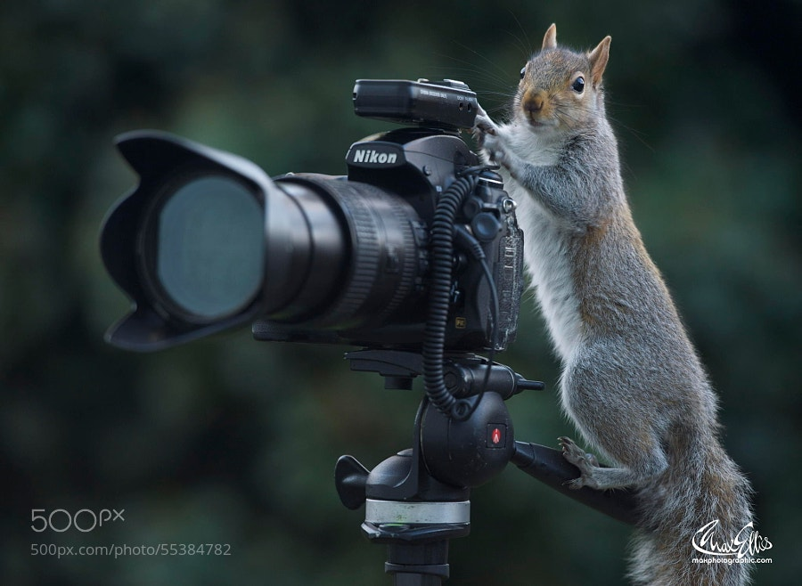 Photograph What's my motivation? by Max Ellis on 500px