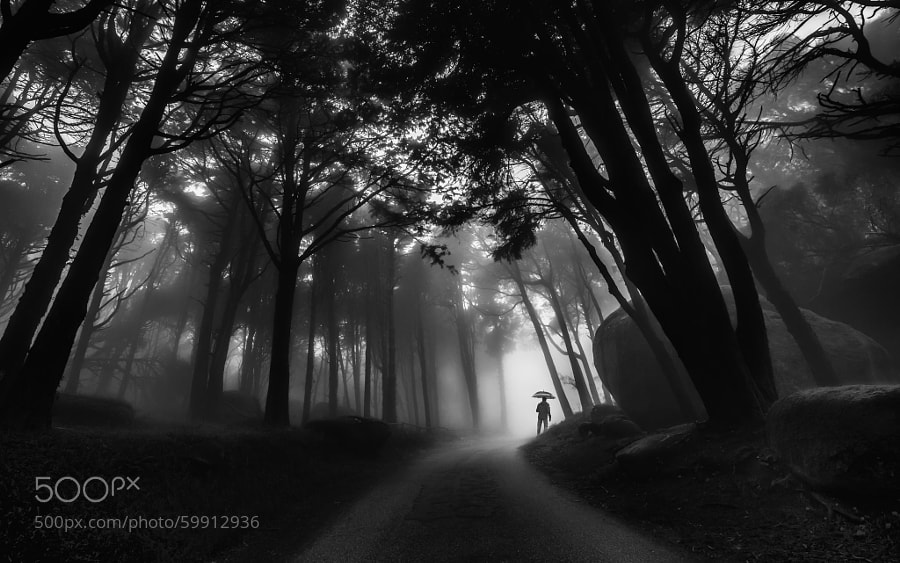 Photograph Through the mist by Paulo Mendonça on 500px