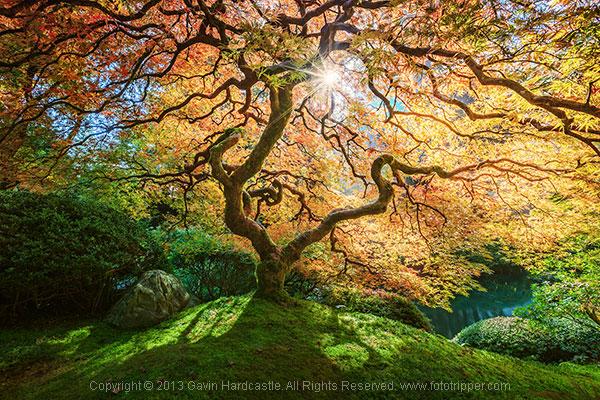 4 Tips for Taking Better Photographs of Trees