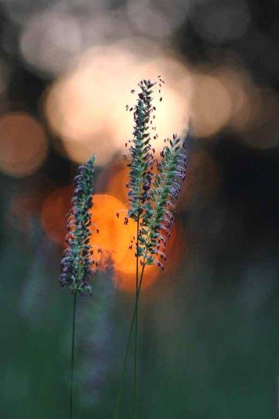 003 Meadow Sunrise
