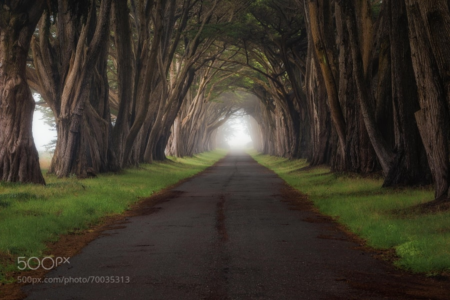 Photograph Foggy Road by Casey McCallister on 500px