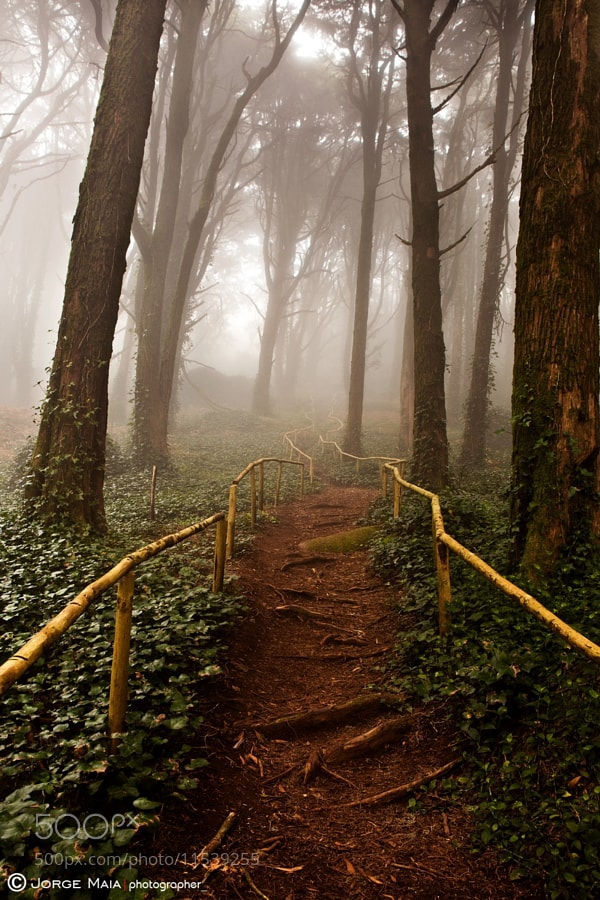 Photograph The pathway by Jorge Maia on 500px