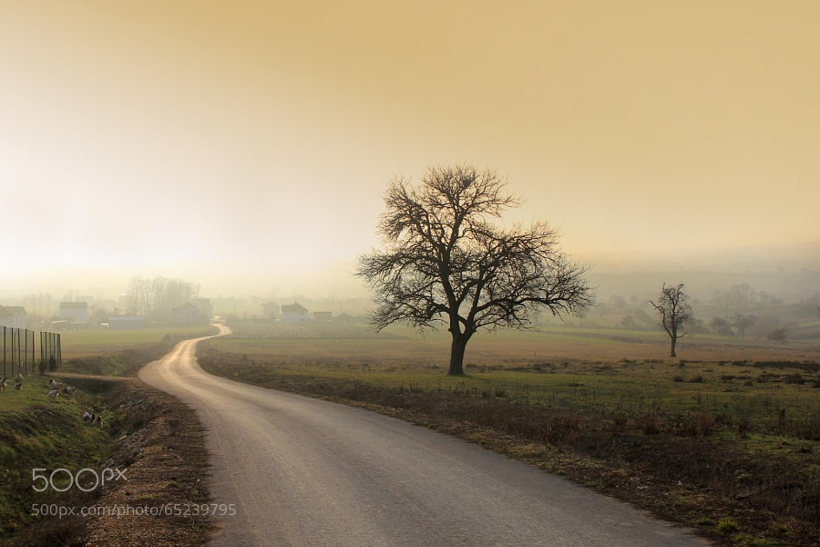Photograph The road by Vendenis . on 500px