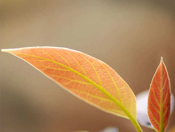A shallow depth of field isolates the leaves from the soft background