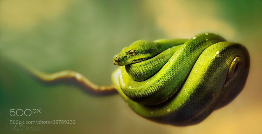 Photograph well wrapped by Sonja Probst on 500px