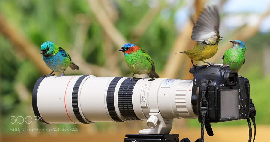 Photograph fighting !!! by Itamar Campos on 500px