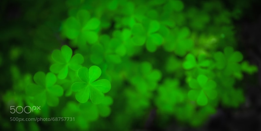 Photograph Clovers by Redcup2 on 500px
