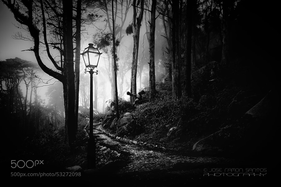 Photograph Foggy path by Jose Ramon Santos Mosquera on 500px