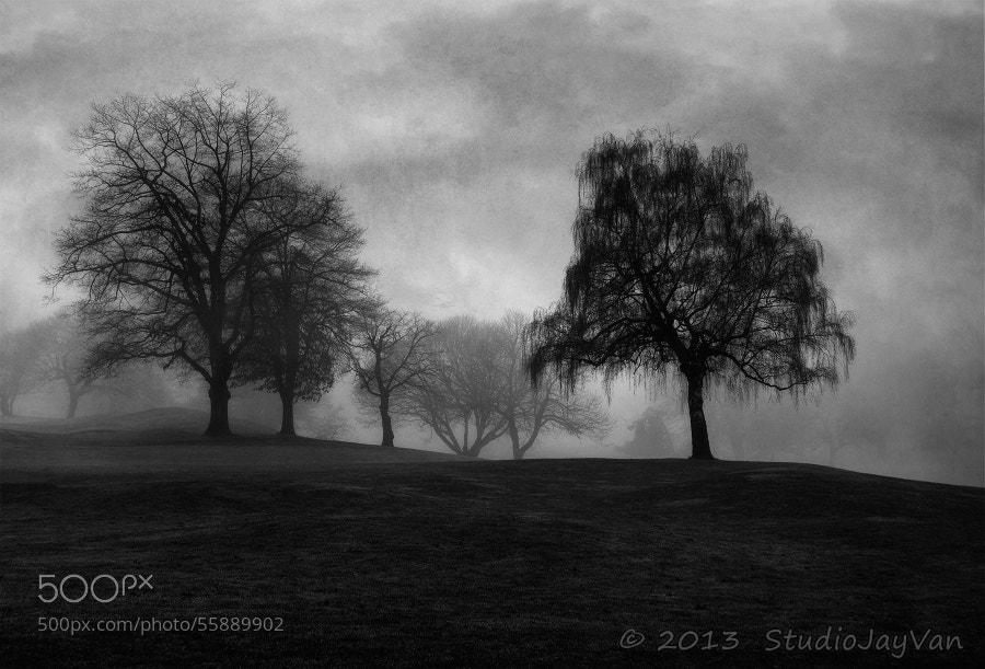 Photograph Dark Beauty by Jayme Hagen on 500px
