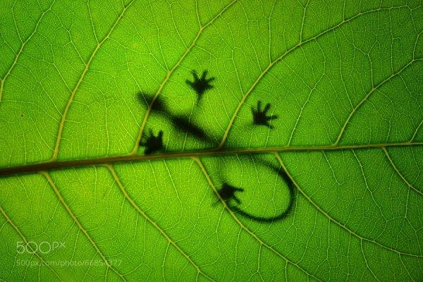 A Selection of Photos with a Green Theme