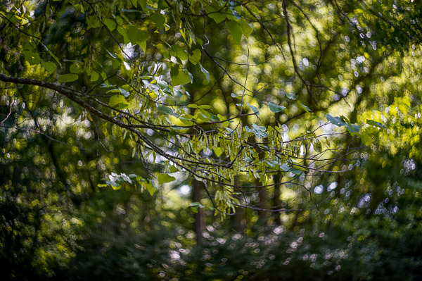 Hacking_Photography_Helios_44-2_Lens-008