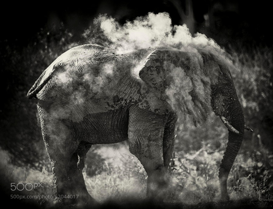 Photograph Dust by Chris Fischer on 500px