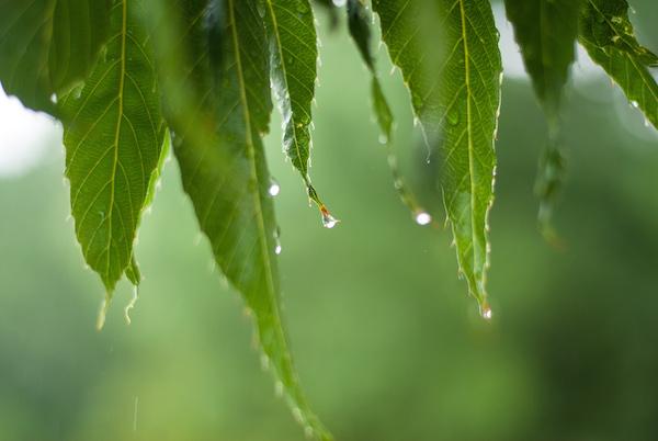 Leaves rain