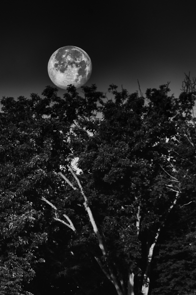 moon photography with a tree in the foreground