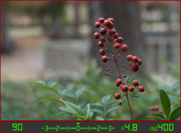 berries-correct-small-aperture
