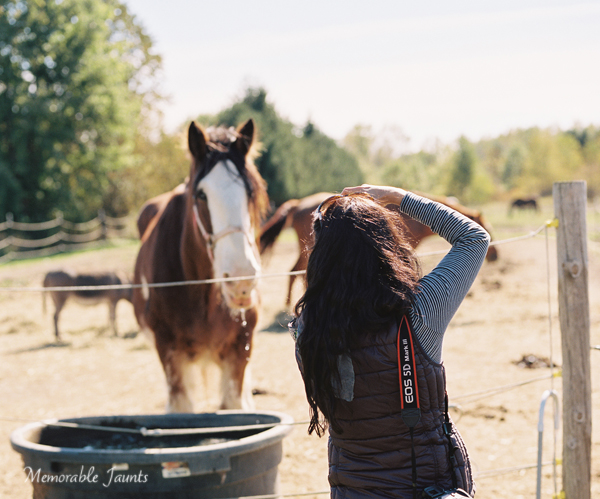 Photographing Horses on film during the slow season Memorable Jaunts