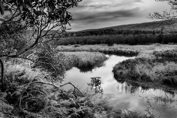 By studying the images of great photographers of the past and present we can learn how to approach our own images. This image, captured in the Canaan Valley Resort State Park in West Virginia, reminded me of Ansel's image The Tetons and Snake River.