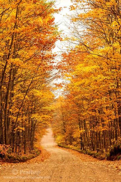 8 Hermoso follaje de otoño en el camino hacia Agate Falls en la península superior, Michigan Colores de otoño Naturaleza Paisaje Fotografía de aves de vida silvestre por Prathap
