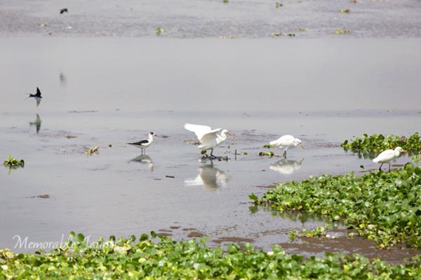 Bird Photography in Chennai India